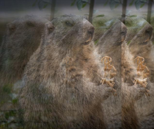 Groundhog Infinito